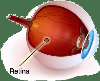 Rock-Hill-Eye-Center-Retina